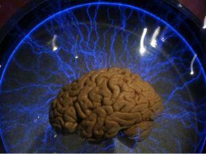 human_hybrid_brain